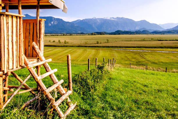 wildlife observation point wildlife observation point - raised blind high seat stock pictures, royalty-free photos & images