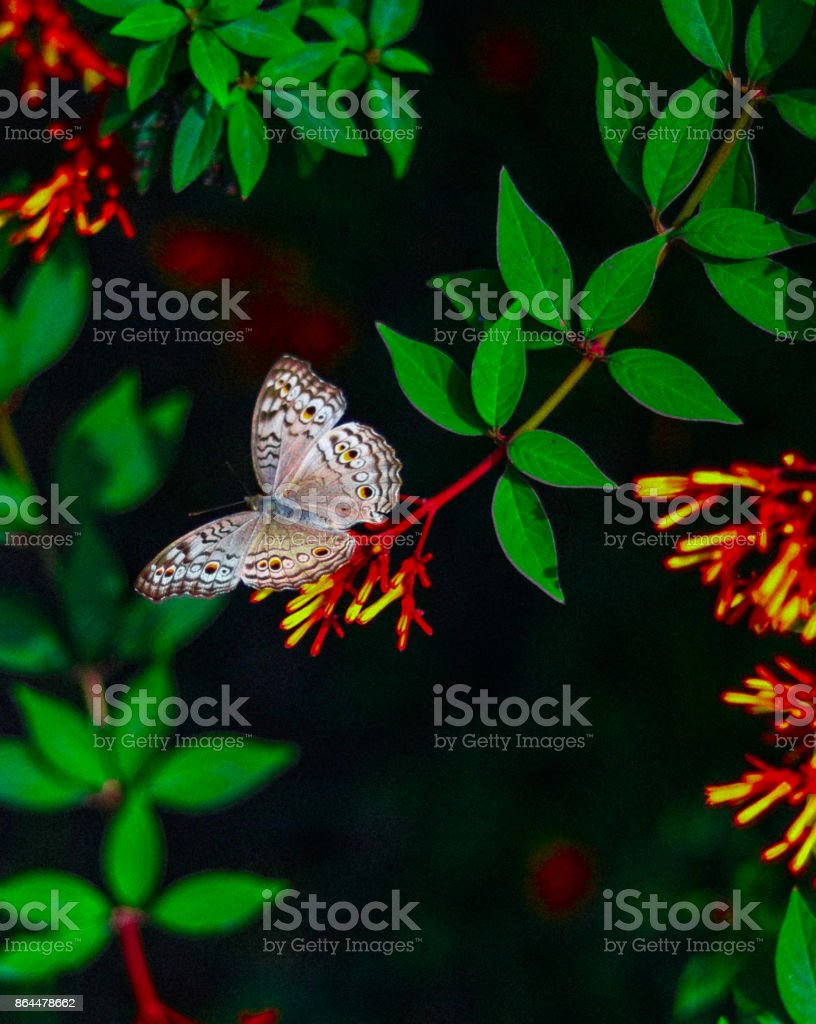 Wildlife of Bangladesh stock photo