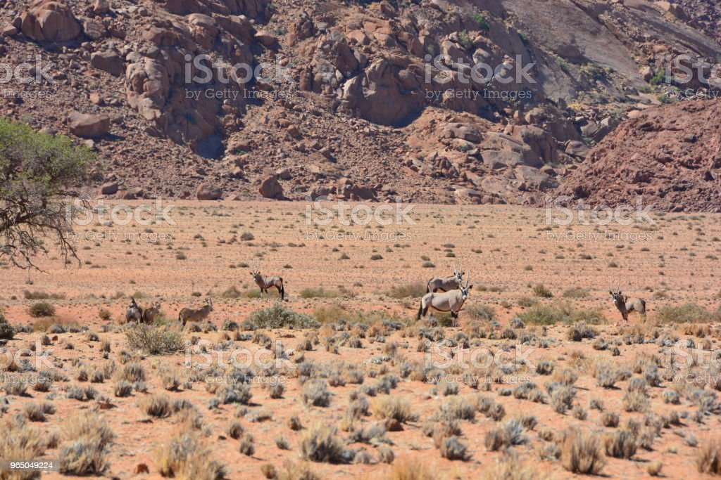 Wildlife of Namibia and Landscapes zbiór zdjęć royalty-free
