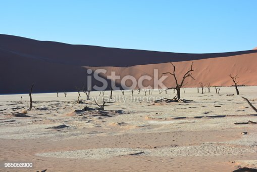 Wildlife Of Namibia And Landscapes Stock Photo & More Pictures of African Elephant