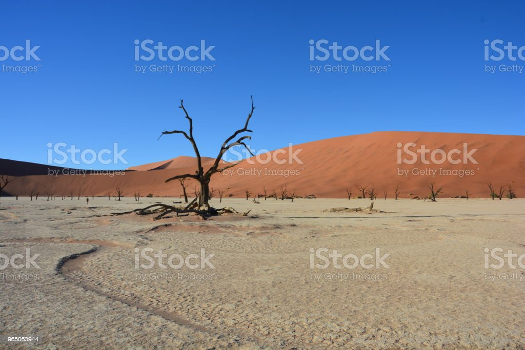 Wildlife of Namibia and Landscapes royalty-free stock photo