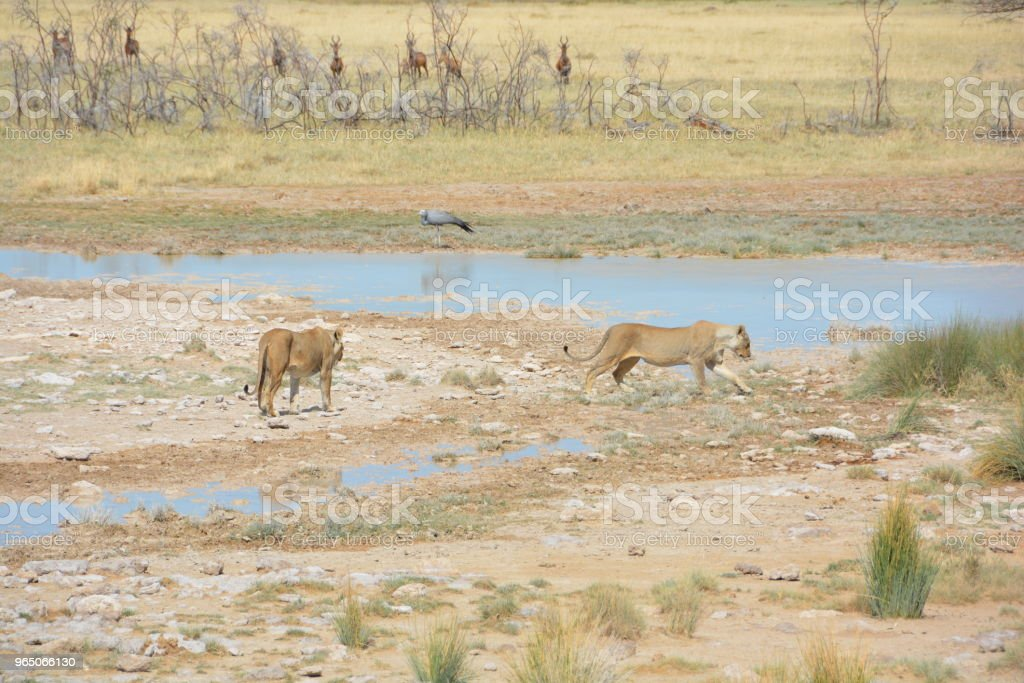 Wildlife of Namibia and Landscapes zbiór zdjęć royalty-free