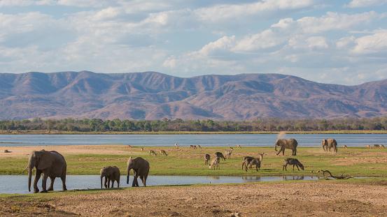 Wildlife On The Zambezi River Stockfoto und mehr Bilder von Afrika