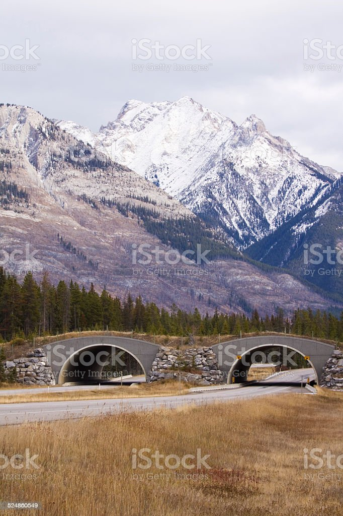 Wildlife overpass along Trans Canada highway in Banff National Park stock photo