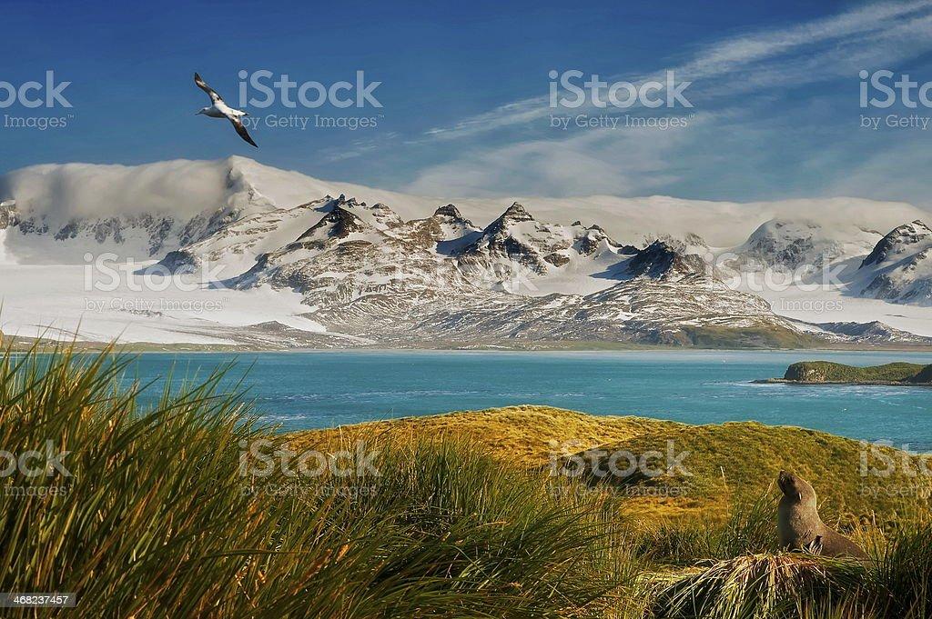 wildlife paradise stock photo