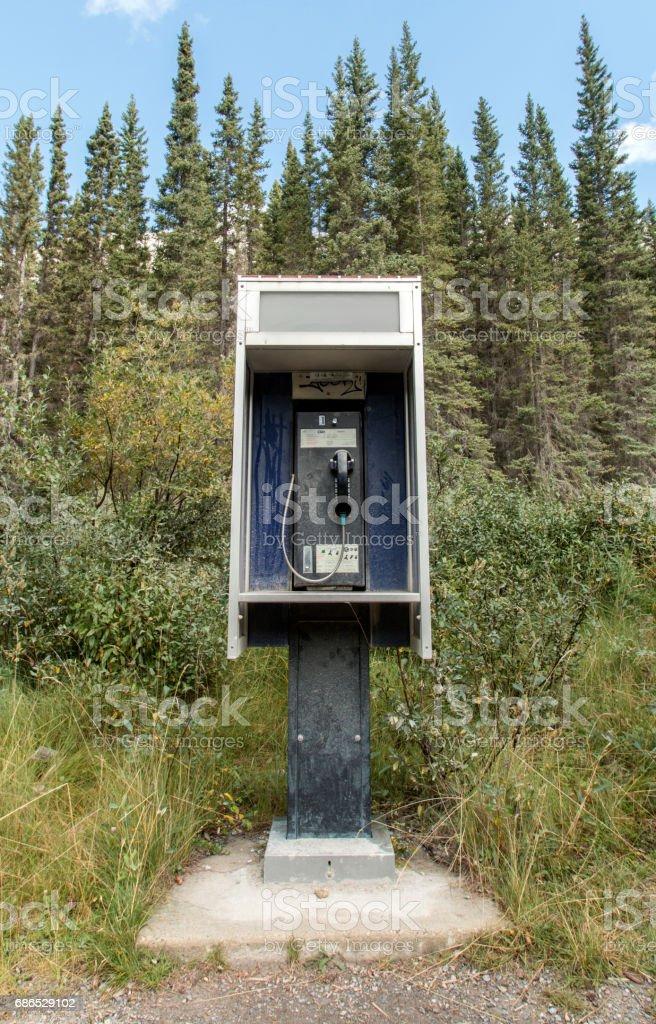 Wildlife payphone stock photo
