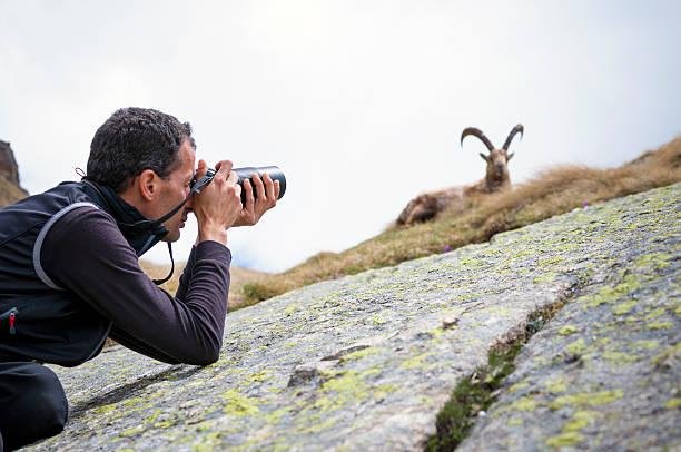 wildlife photographer - steinbock mann stock-fotos und bilder