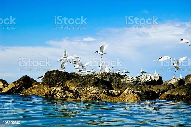 Photo of wildlife