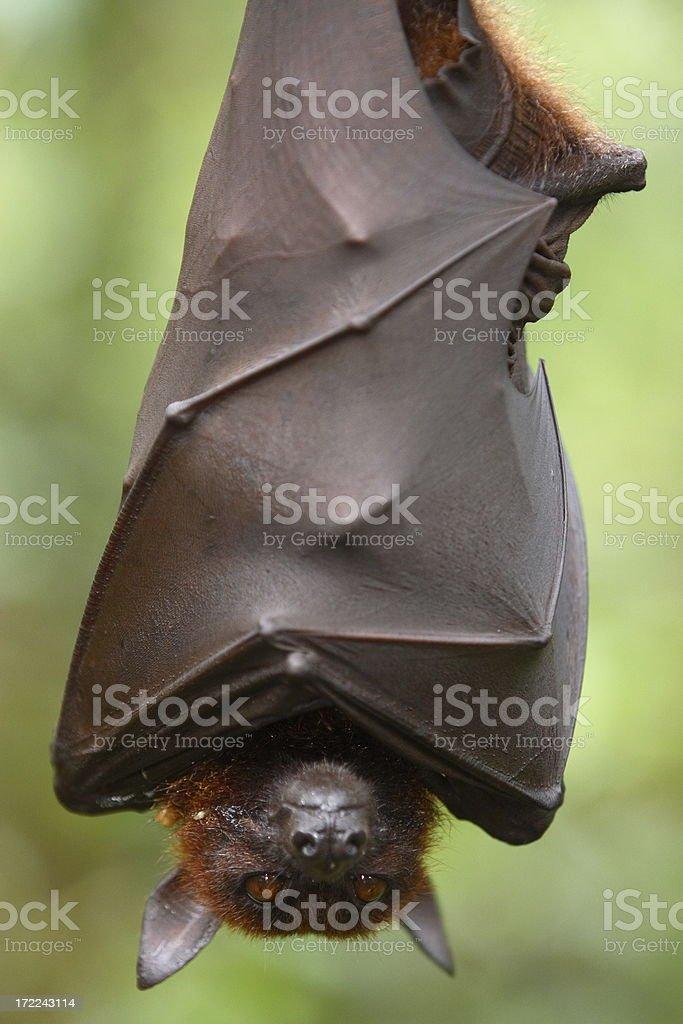 Wildlife stock photo