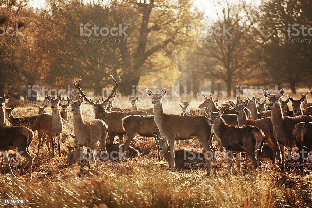 Wildlife – Foto