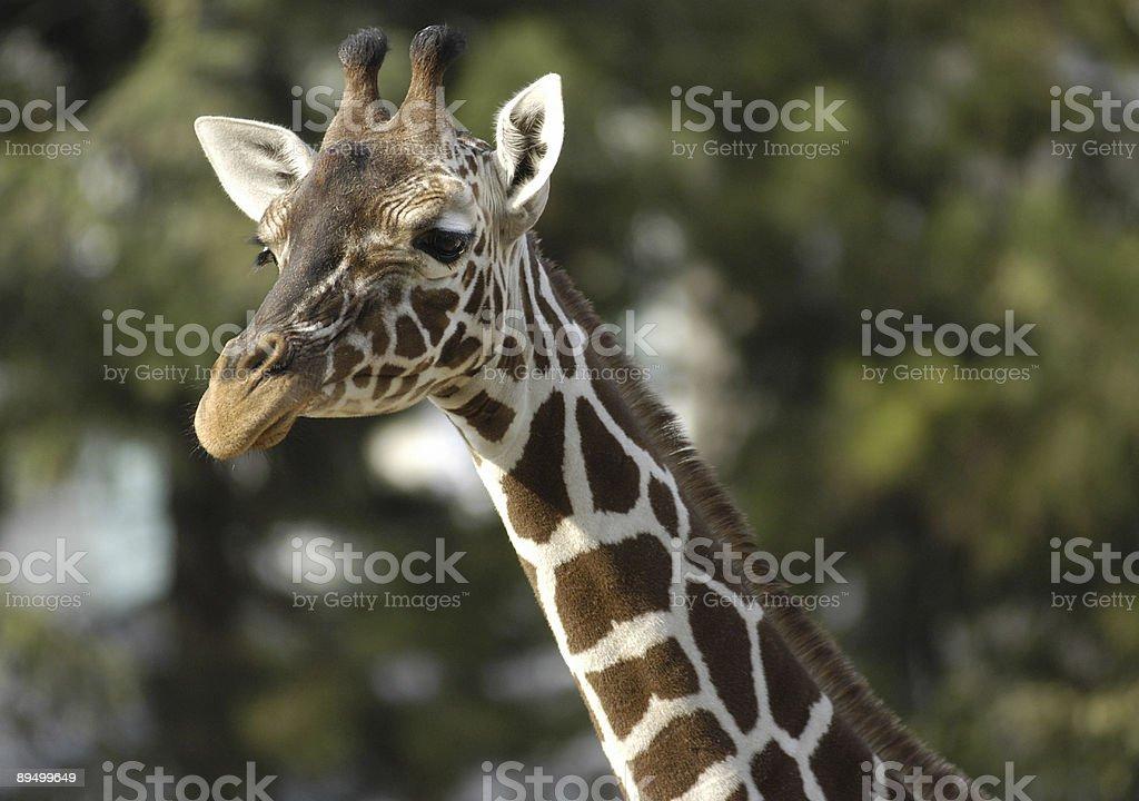 Wildlife royaltyfri bildbanksbilder