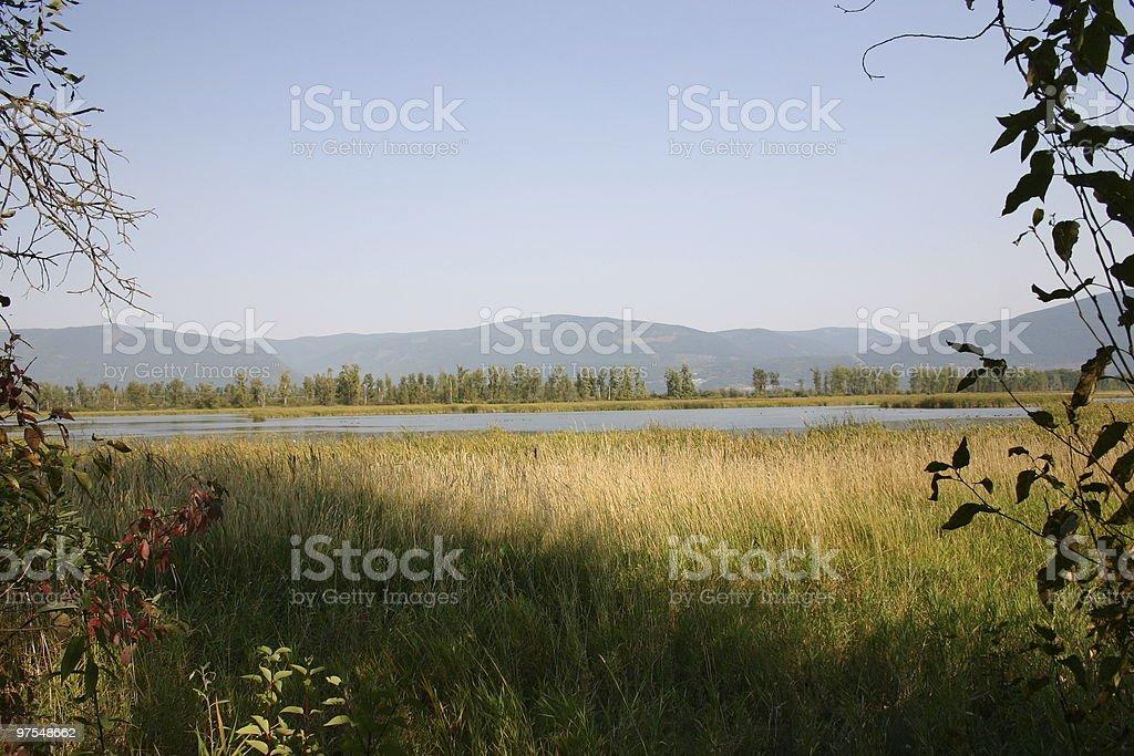 Wildlife reserve framed with vegitation royalty-free stock photo