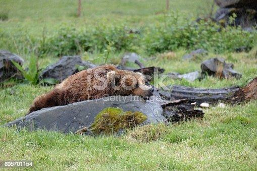 Animals from Wildlife Safari in Winston Oregon