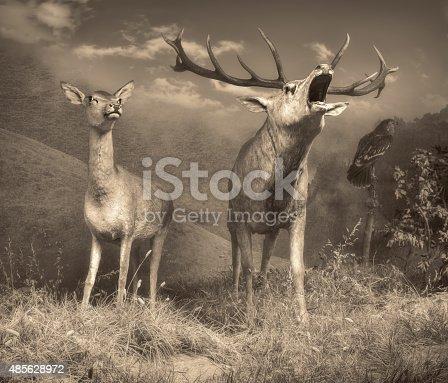istock Wildlife scene 485628972