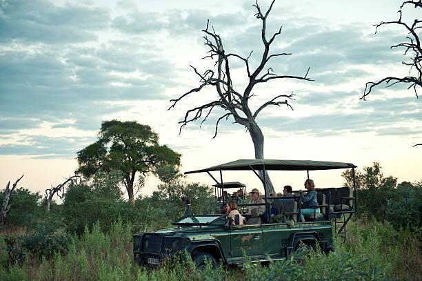 Wildlife viewing in chitabe concessionokavango deltabotswana picture id458611405?b=1&k=6&m=458611405&s=612x612&w=0&h=pddrylrjipcv6 m 6naii7gqlka fa3d8ol2zbrjojq=