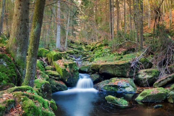wildromantische steinklamm - bayerischer wald bildbanksfoton och bilder