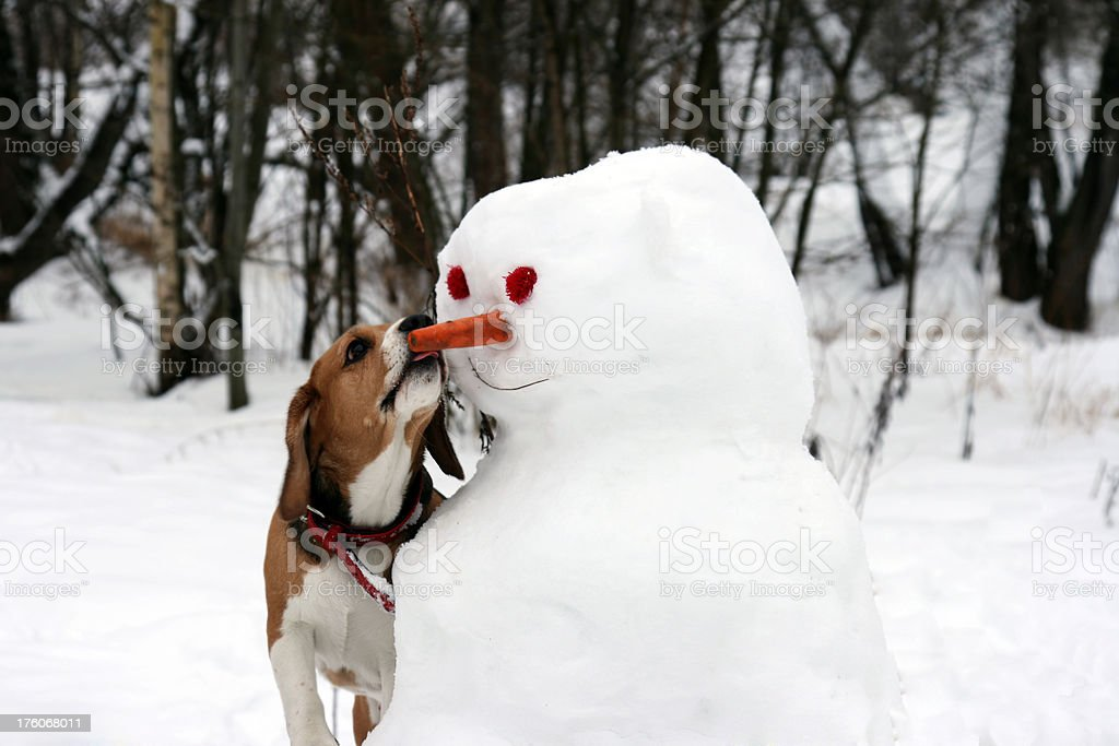 I will kiss you! royalty-free stock photo