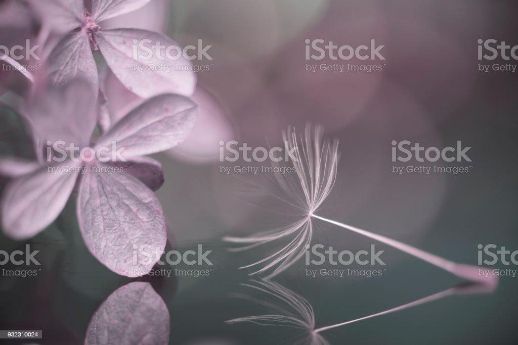 U will Soon Love Me stock photo
