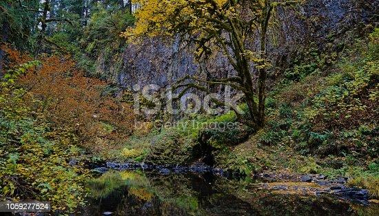 Northwest Oregon's Cascade Range Foothills. Santiam State Forest. Abiqua Falls Trail.