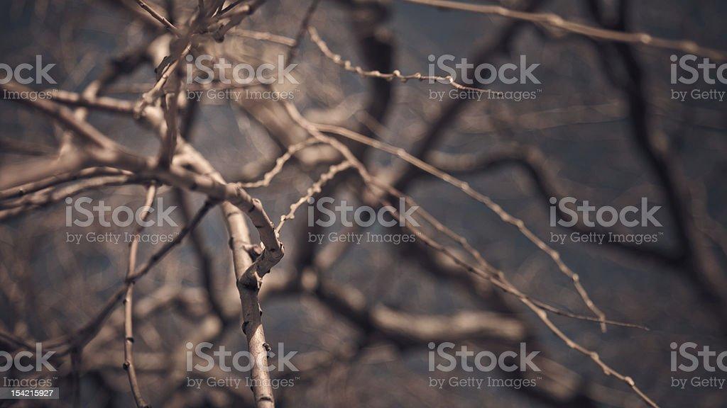 Willow branch gegen verschwommen Hintergrund – Foto