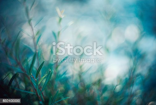 istock Willow branches in soft evening light 832400000