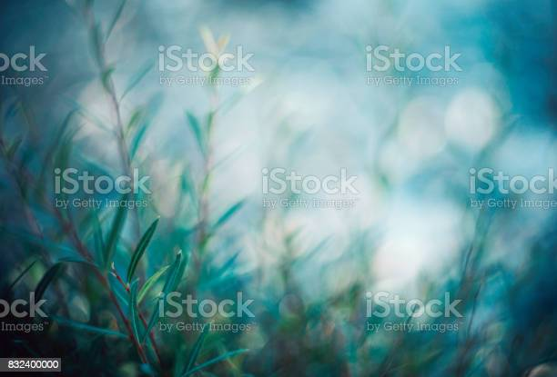 Photo of Willow branches in soft evening light