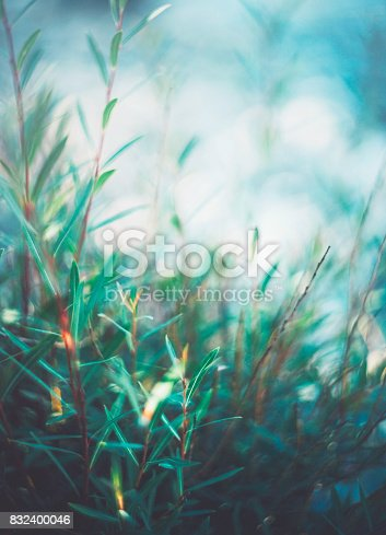 istock Willow branches in soft evening light 832400046