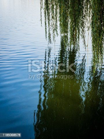 Weeping willow tree branches over water.