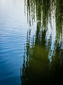 weeping willow on lake