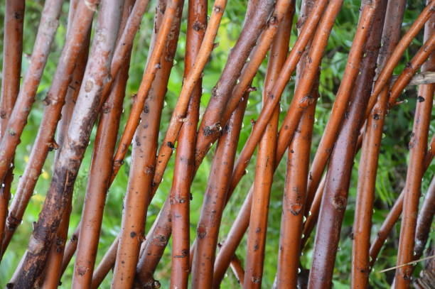 Willow  branches wooven together A fence of wet willow branches j werken stock pictures, royalty-free photos & images