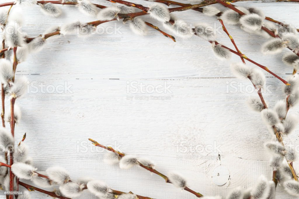 willow catkins frame on white textured wooden background stock photo