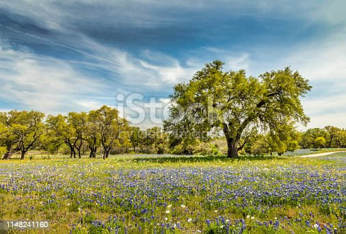 Willow city loop, Texan spring landscape with blue bonnets