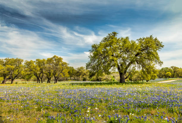 Willow city loop, Texan spring landscape with blue bonnets stock photo