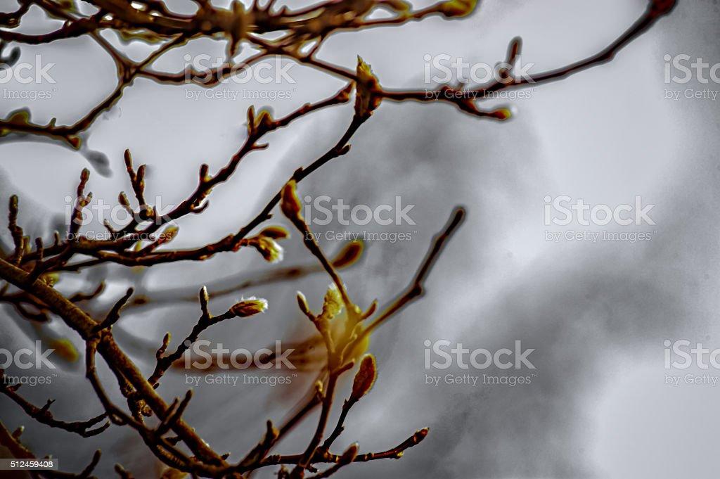 Willow flower stock photo