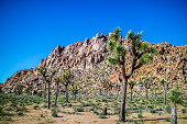 A natural rock formation of desert boulder rocks piled up together in Ryan Mountain at Joshua National Park