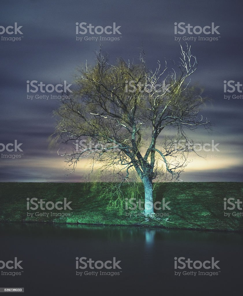 Willow in the Night royalty-free stock photo