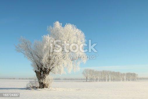 1034754000 istock photo Willow in winter scenery 153724337
