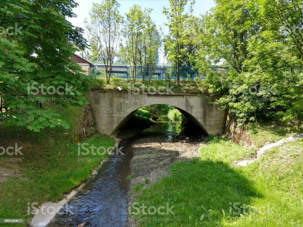 Willow near the brook. royalty-free stock photo