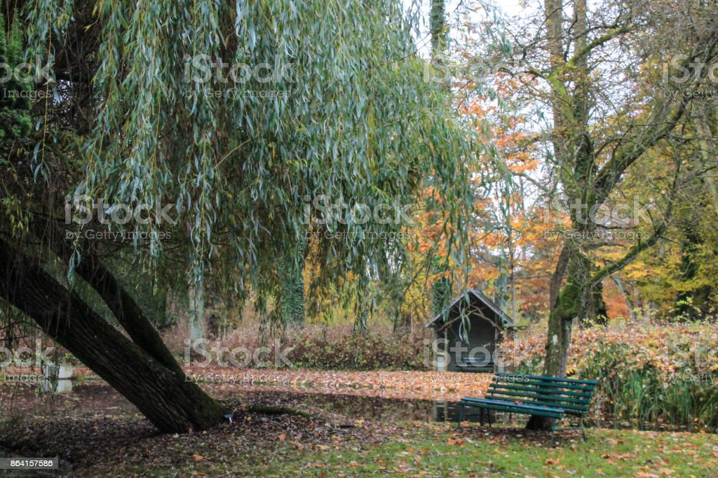 Willow on a lake in autumn royalty-free stock photo