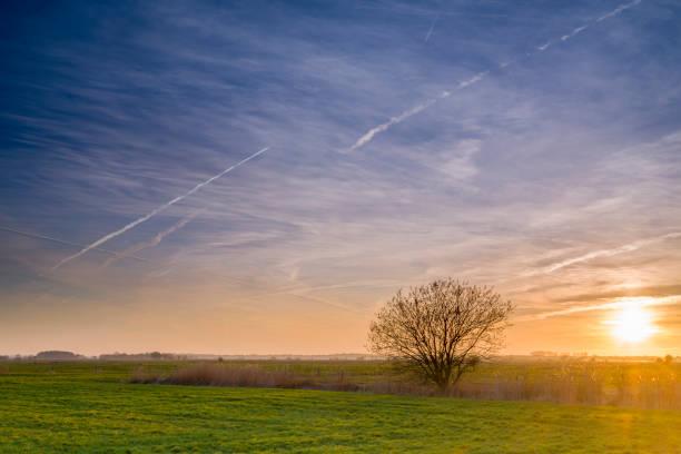 saule pleureur et roseau commun dans les pâturages au coucher du soleil - paysage mois de mars photos et images de collection