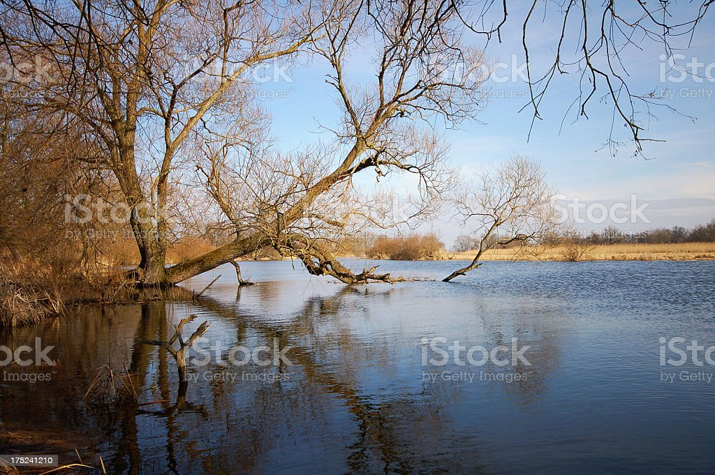 willow tree at river landscape stock photo