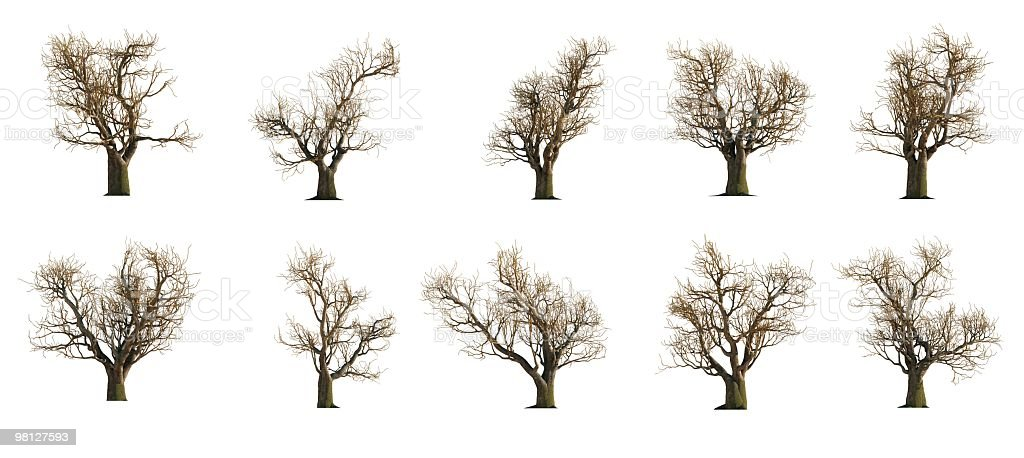 Willow Tree Collection royalty-free stock photo