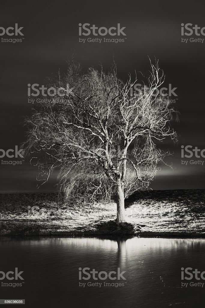 Willow Tree Light royalty-free stock photo