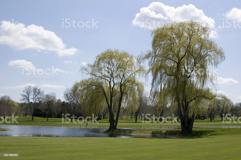 Willow trees in a sunny landscape royalty-free stock photo