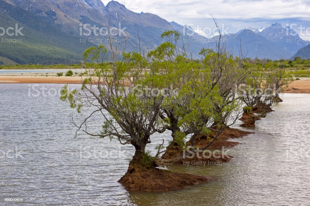 Willow trees in the Lake Wakatipu, near Glenorchy and Queenstown, New Zealand stock photo