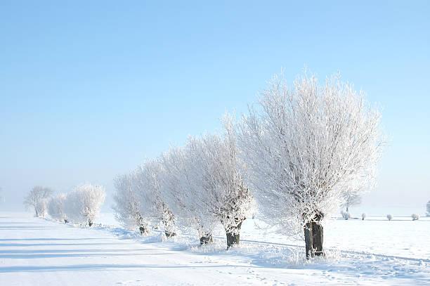 willow trees in winter - skåne bildbanksfoton och bilder