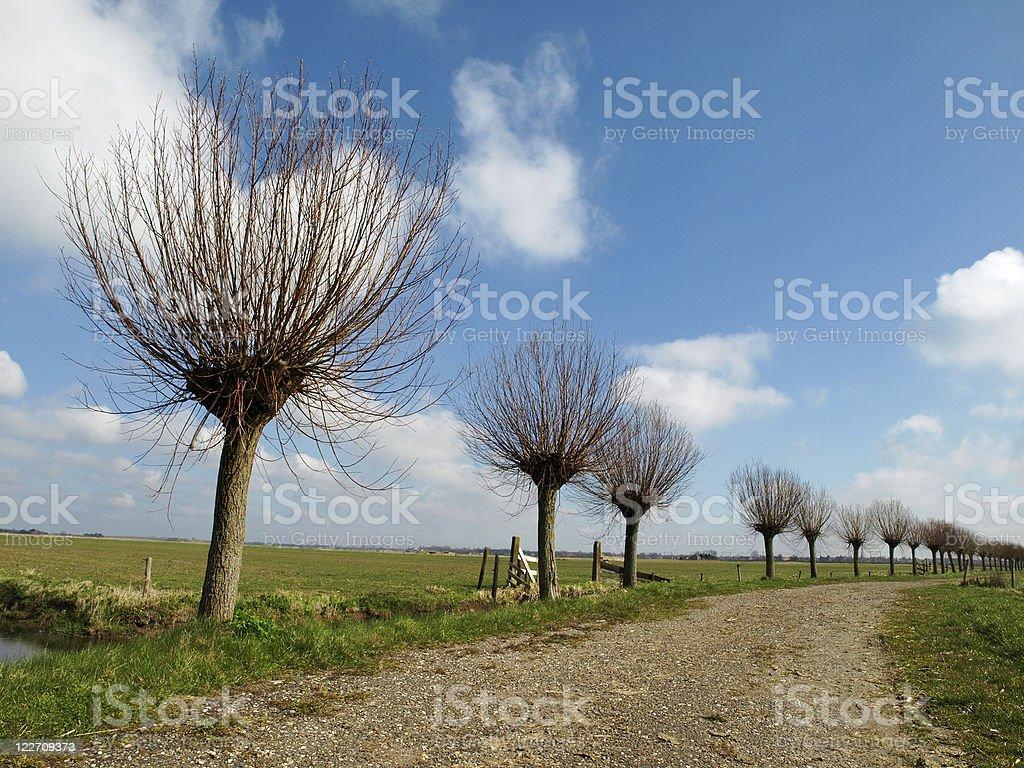 Willow trees royalty-free stock photo