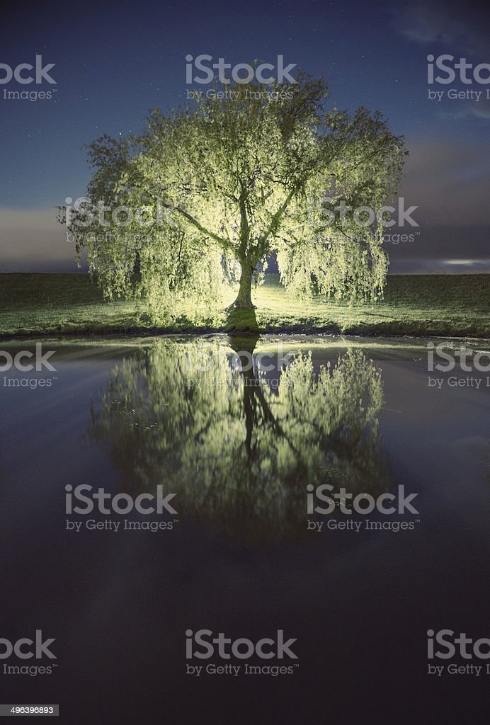 Willowed Branches royalty-free stock photo