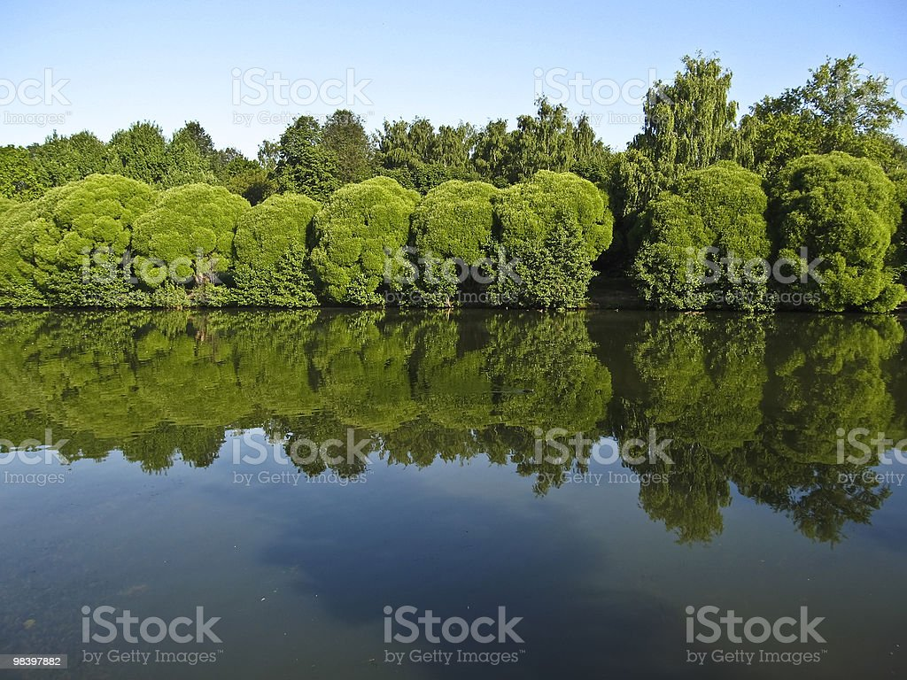 Willows and lake royalty-free stock photo