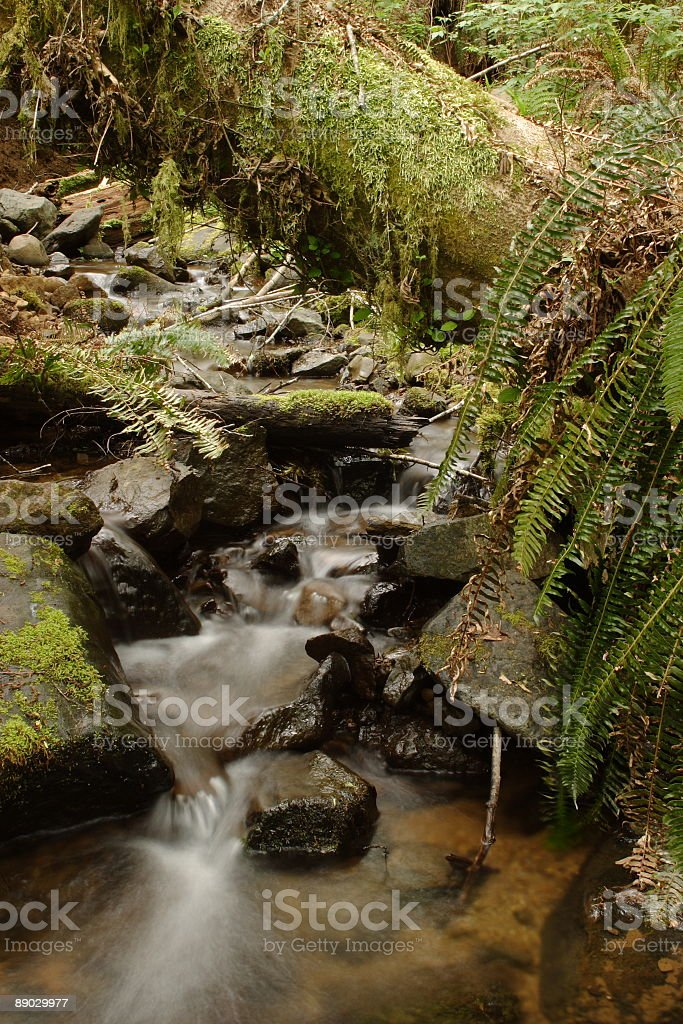 Wilson River Trail Stream royalty-free stock photo